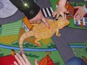23 IV 2014 r. - Warsztaty przyrodnicze Agama Brodata - fotorelacja , p1280770