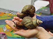 Cykl: Mali odkrywcy zwierząt, warsztaty: pt. Żłów i ślimak, fot. Katarzyna Boszko