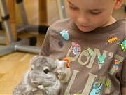 Mali odkrywcy zwierząt. Wizyta szynszyli. Fot. Anita Kot