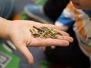 Warsztaty przyrodnicze z szynszylą w Przedszkolu 4 Słonie. 22 IX 2016 r. Fot.: Anita Kot