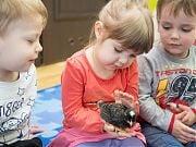 Kurczaczki, kaczuszki, króliczki - warsztaty przyrodnicze. Kwiecień 2018 r.