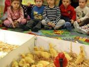 26 III 2014 r. - Zajęcia warsztatowye - Wielkanocne cudne pisklaki-kaczuszki i kurczaki - fotorelacja , img_1324