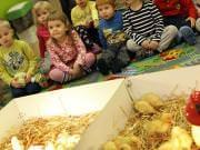 26 III 2014 r. - Zajęcia warsztatowye - Wielkanocne cudne pisklaki-kaczuszki i kurczaki - fotorelacja , img_1326