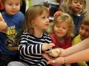 26 III 2014 r. - Zajęcia warsztatowye - Wielkanocne cudne pisklaki-kaczuszki i kurczaki - fotorelacja , img_1684