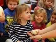 26 III 2014 r. - Zajęcia warsztatowye - Wielkanocne cudne pisklaki-kaczuszki i kurczaki - fotorelacja , img_1685