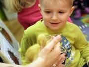 26 III 2014 r. - Zajęcia warsztatowye - Wielkanocne cudne pisklaki-kaczuszki i kurczaki - fotorelacja , img_1733