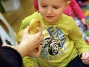 26 III 2014 r. - Zajęcia warsztatowye - Wielkanocne cudne pisklaki-kaczuszki i kurczaki - fotorelacja , img_1735