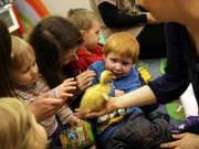 26 III 2014 r. - Zajęcia warsztatowye - Wielkanocne cudne pisklaki-kaczuszki i kurczaki - fotorelacja , img_1764