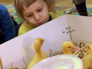 26 III 2014 r. - Zajęcia warsztatowye - Wielkanocne cudne pisklaki-kaczuszki i kurczaki - fotorelacja , img_1937