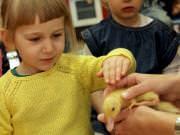 26 III 2014 r. - Zajęcia warsztatowye - Wielkanocne cudne pisklaki-kaczuszki i kurczaki - fotorelacja , img_1971