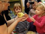 26 III 2014 r. - Zajęcia warsztatowye - Wielkanocne cudne pisklaki-kaczuszki i kurczaki - fotorelacja , img_1980