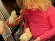 26 III 2014 r. - Zajęcia warsztatowye - Wielkanocne cudne pisklaki-kaczuszki i kurczaki - fotorelacja , img_1987