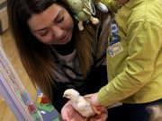 26 III 2014 r. - Zajęcia warsztatowye - Wielkanocne cudne pisklaki-kaczuszki i kurczaki - fotorelacja , img_1994